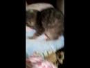 Трахает подушку видео разделяю