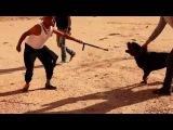 Ousman - Wanted fl 7ouma [Official Clip ᴴᴰ]