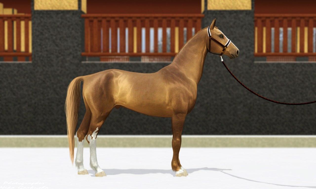 Регистрация лошадей в RHF 1.1 - Страница 37 _q5JtIn70VI
