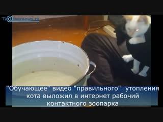 """В Твери молодая пара утопила котенка и выложила видео для _""""обучения_"""" хозяев"""