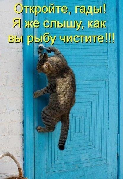 юмор приколы: