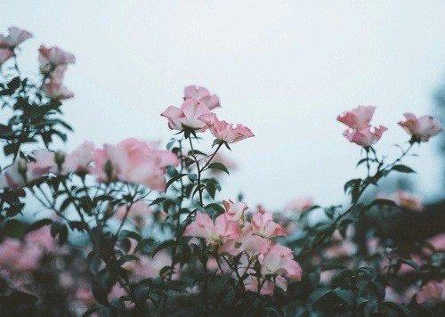 О жизни: 1. Избавьтесь от всего, что не является для Вас полезным, красивым и радостным. 2. Хороша или плоха ситуация, она изменится. 3. Независимо от того, как вы себя чувствуете, вставайте, одевайтесь и идите. 4. Лучшее еще впереди. 5. Где-то Внутри вы всегда счастливы. Так что, будьте счастливы :)