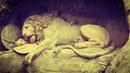 """Максим Аверин on Instagram """"Одно из самых ярких впечатлений от города Люцерна, это «Умирающий лев». Самый печальный памятник мира. Умирающий лев ..."""