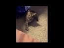 Cat Morze