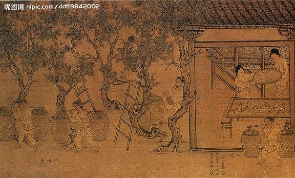 китайский пурпурный чай для похудения отзывы