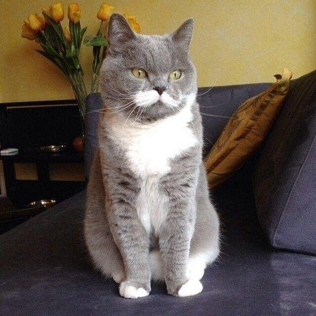 Кот с усами