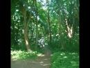 Пение птиц в нашем лесу.