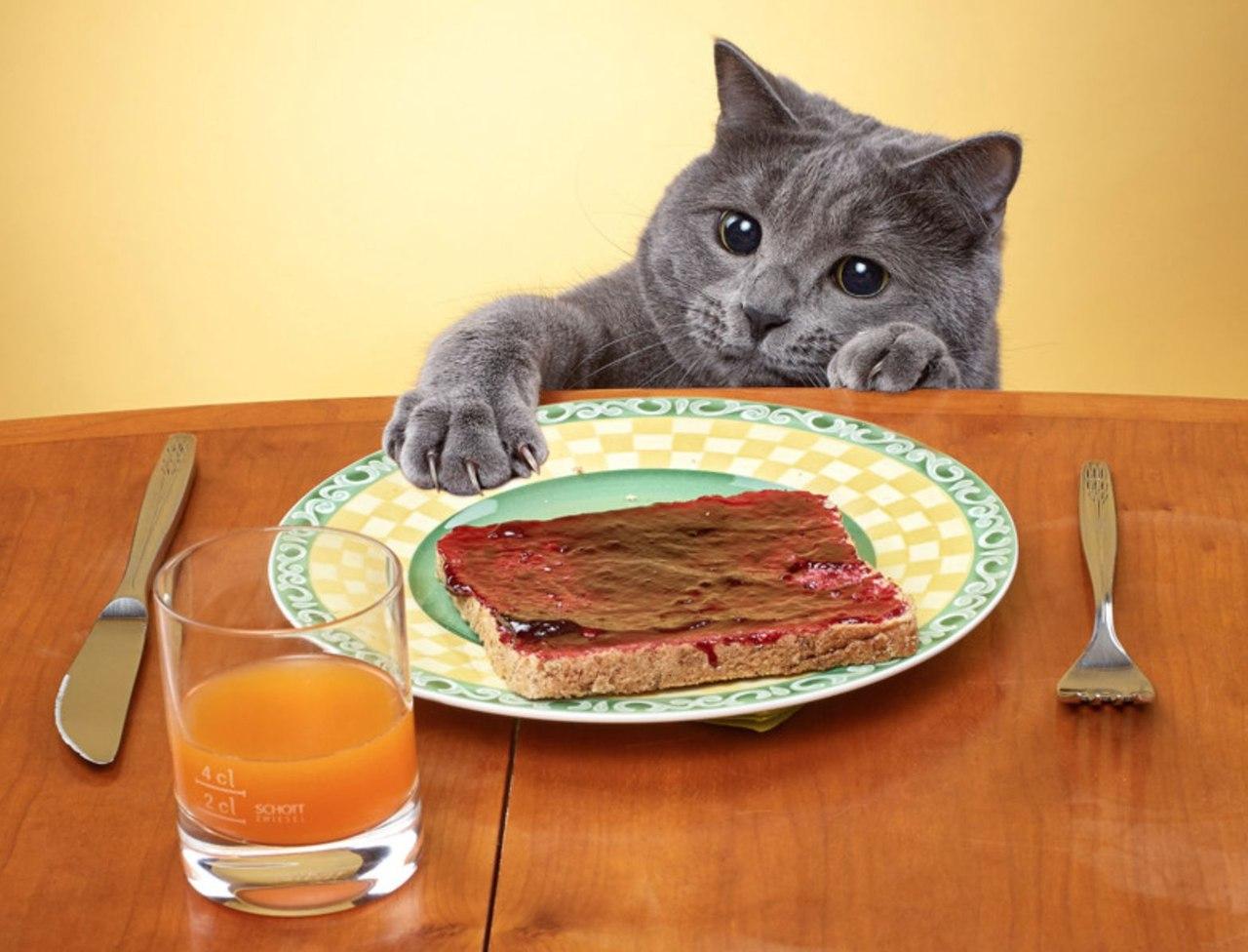 Кот ест прикольные картинки