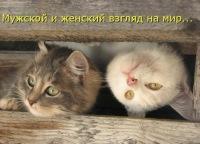 Мария Владимировна, 15 апреля 1994, Донецк, id171521220