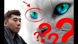 kucing ini meramalkan pemenang piala dunia 2018 bagaimana tanggapan roy kiyoshi terbaru