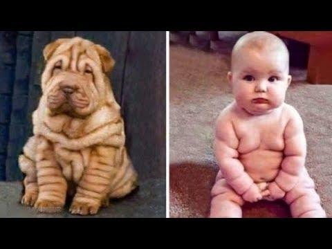 Pets que se parecem com seus donos e com outras pessoas