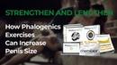 Phalogenic Traction, Phalogenics Traction Exercises, Phalogenics Technique