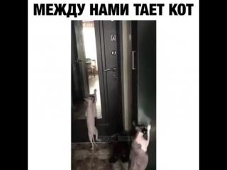 Коты в камере пыток