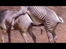 NEW Animal Sex Videos Compilation ✔ - funny animal video 2014 Part4