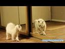 Коты увидели себя в зеркало!