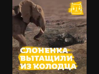 Слоненок упал в колодец