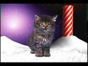 Песня котят К новому году