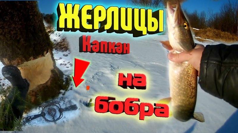 Рыбалка в апреле 2018.Жерлицы. Много сработок. СТАВИМ КАПКАН НА БОБРА. Хата бобра.Рыбалка на Урале