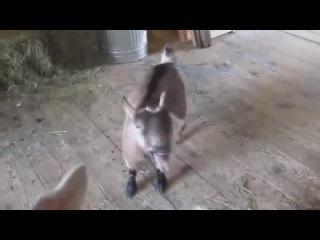 Stas Mihailov - Goat Edition