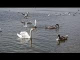 Евпатория, лебединое озеро.