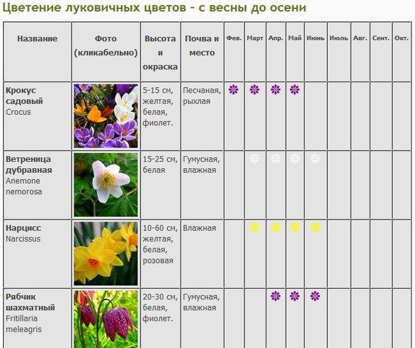 Таблица со сроками цветения