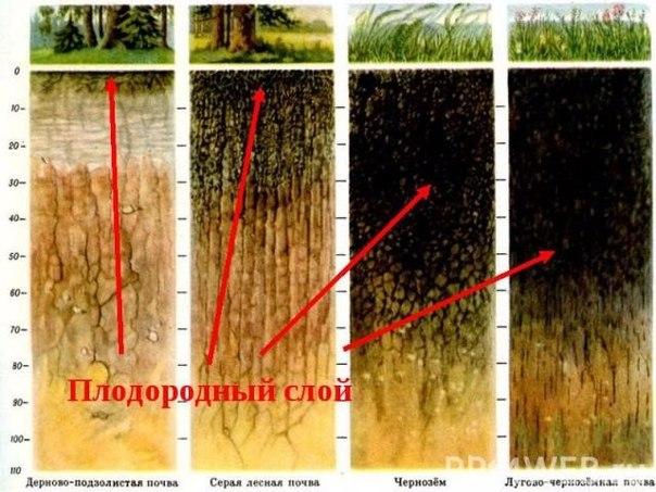 Как раскислить почву в домашних условиях
