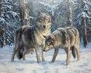 Скачать обои животные, волки, он и она, Татьяна Данчурова 800x600.