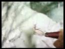 Сны Коджорского леса Kojris Tyis Sizmrebi