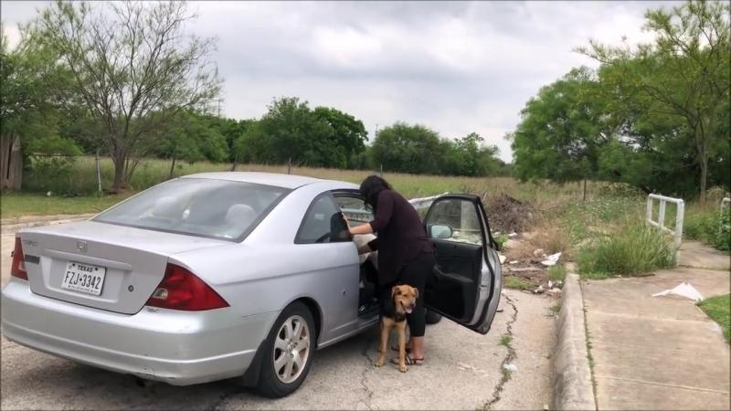 Выбросила собак и уехала!