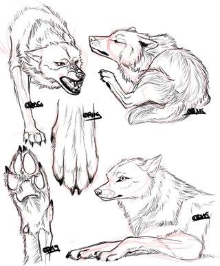 Анатомия волка для художника фото 634-576