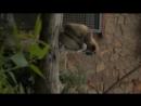 подсмотрено в нашем зоопарке