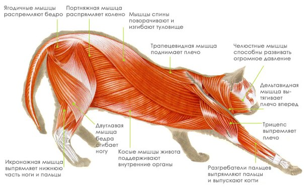 с вами тело кошки.