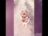 RIP my dear dog