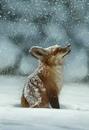 Таким был прежде мой Лис. Он ничем не отличался от ста тысяч других лисиц.