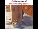 Sneaky cat bops bunny