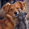 Группа Защиты Животных  (г. Кременчуг)