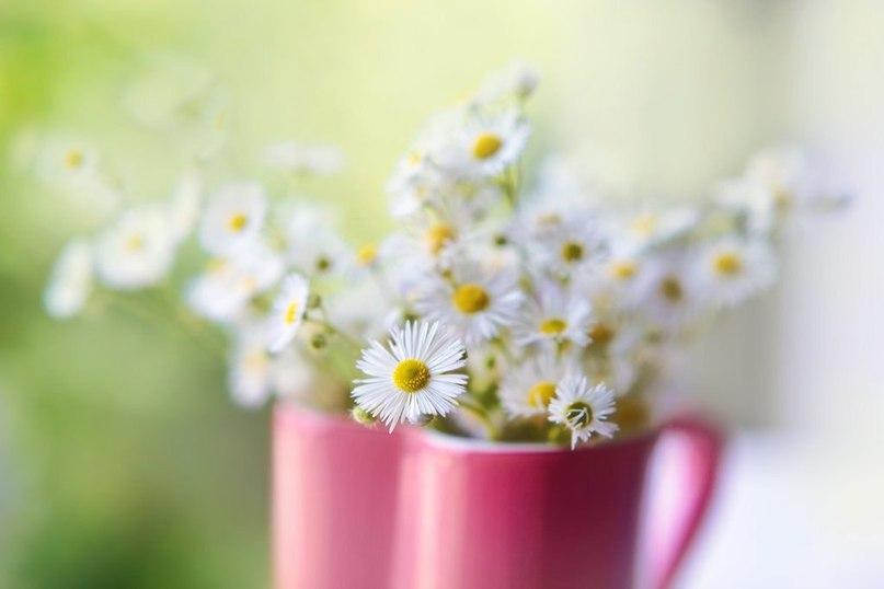 природа цветы чашка  № 1486768  скачать