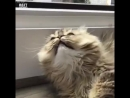 Философия кота