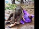 Слоненок играется