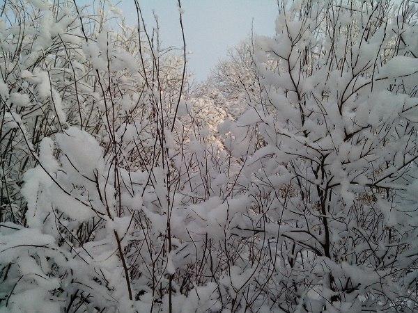 Зимняя пеструшка