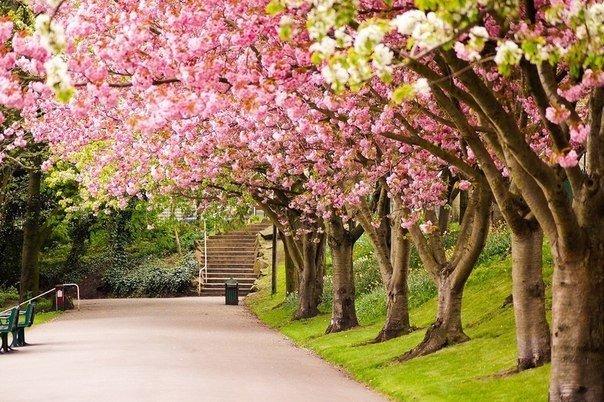 Шеффилд, Англия
