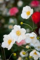 Фото Стебельки с белыми цветами.
