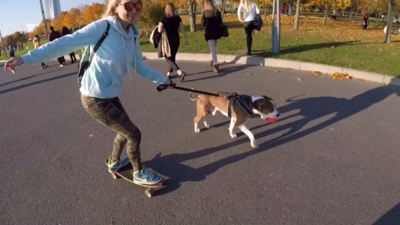 Longboarding with a dog 🐶