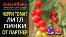 Супер томат черри Литл Пинки F1. Семена Партнер.