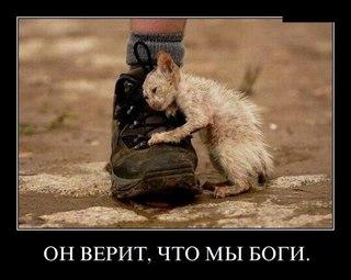 Кот и пёс в южно сахалинске