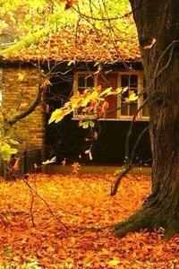 Отцвели цветы, падают листья, птицы молчат, лес пустеет и затихает.ОСЕНЬ. - Страница 6 Uenalw1Bidk