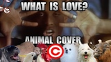 Haddaway - What Is Love (Animal Cover) REUPLOAD