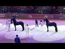 Friesian horse Championship younger studbook stallions Hengstenkeuring 2018 faderpaard