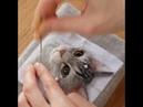Японская художница Wakuneco делает невероятные портреты кошек