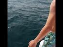 с катера ныряет в открытое море